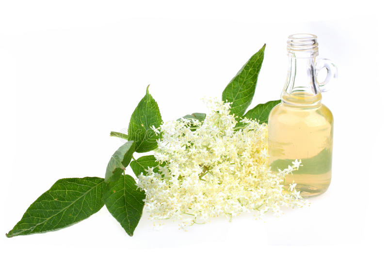 Elderflower. Tea, drink, juice with a sprig of fresh flowers and leafs stock photo