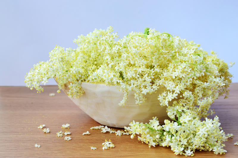 Elderflower. In a wooden bowl. The flowers of the Black Elder - Sambucus nigra, are traditionally used in herbal medicine in the form of teas and cordials royalty free stock photos