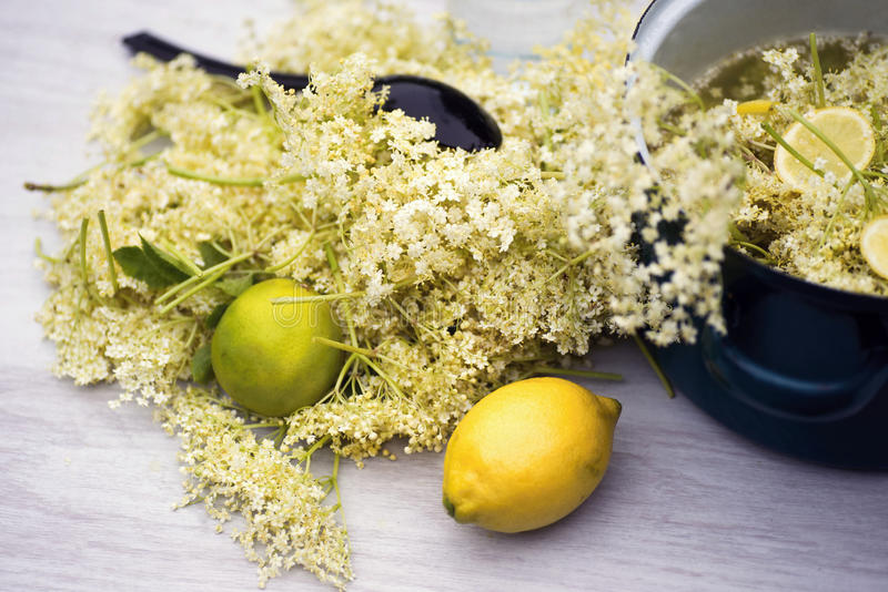 Elderflowers stock image