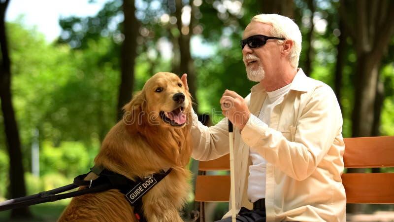 Elderly blind man stroking guide dog, sitting on bench, caring favorite pet. Stock photo royalty free stock images