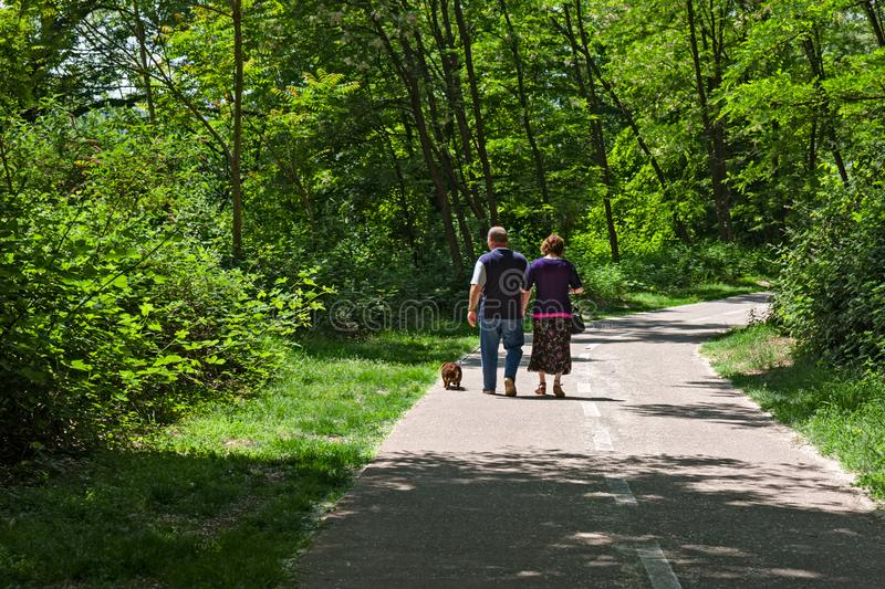 Couple walk with their dog in the park. stock photography