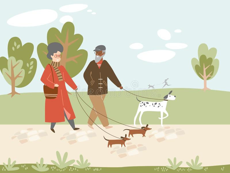 Elderly couple walking dogs together, early morning stock photography