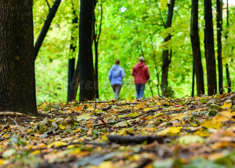 Elderly couple walking at fall autumn park at warm day stock image