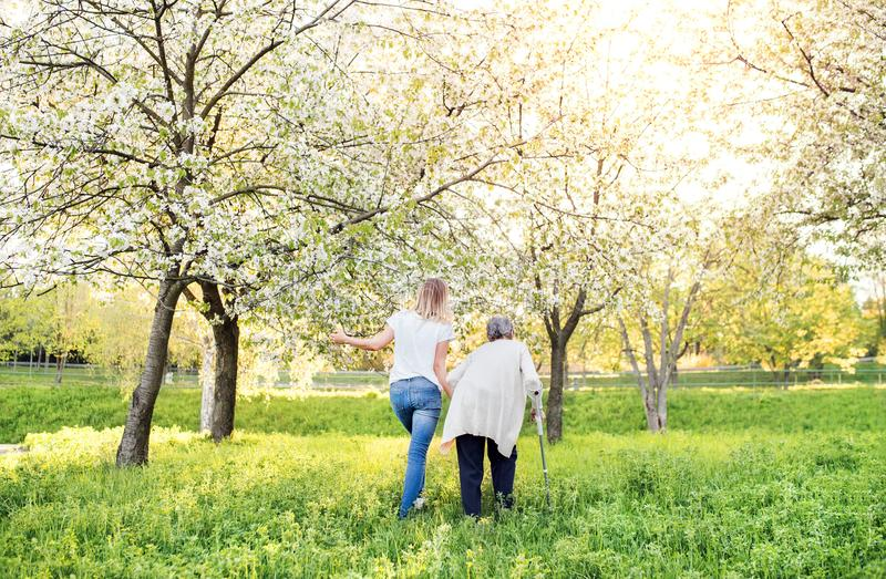 Elderly grandmother with crutch and granddaughter in spring nature. Elderly grandmother with forearm crutch and an adult granddaughter walking outside in spring stock photo