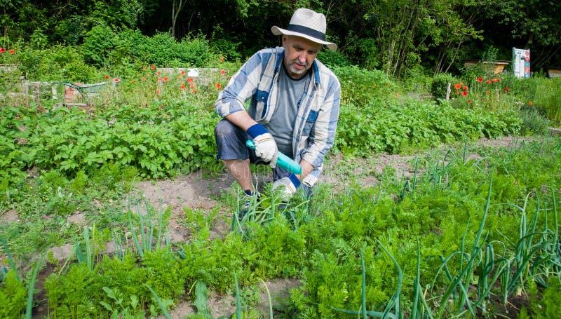 Elderly hobby gardener stock image
