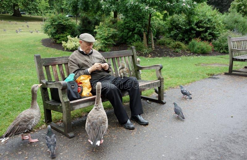 Elderly Man Feeding Geese And Squirrel St James