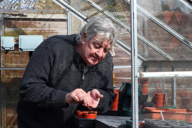 Sowing seeds in a greenhouse. royalty free stock photography