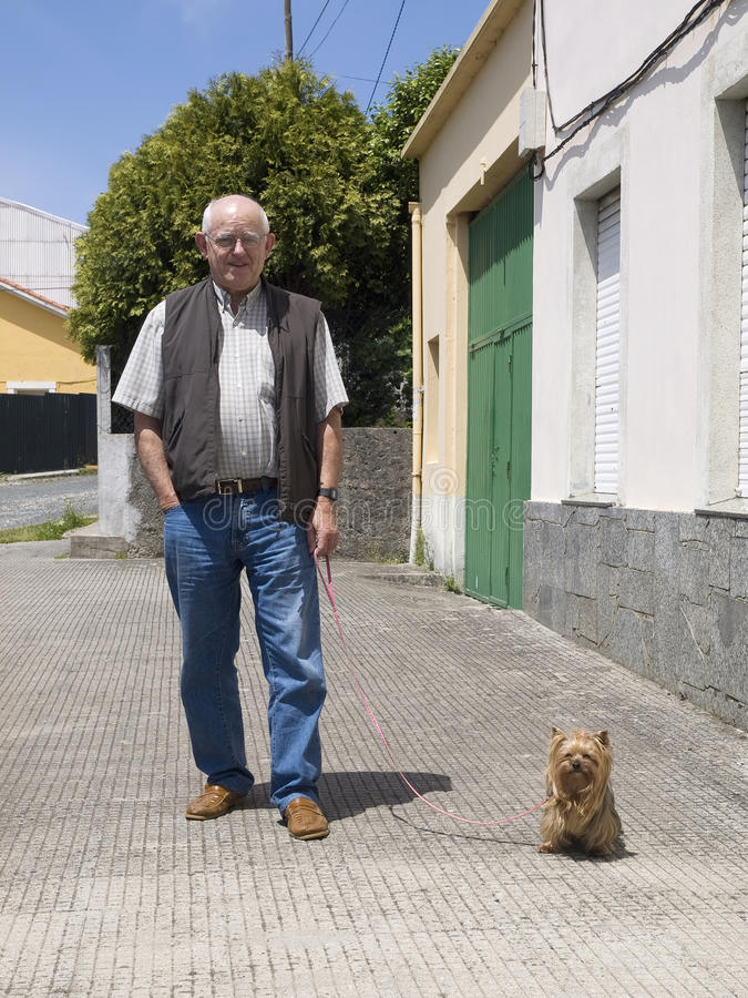 Elderly man walking a dog. And looking at camera in an urban setting and on a sunny day royalty free stock photography
