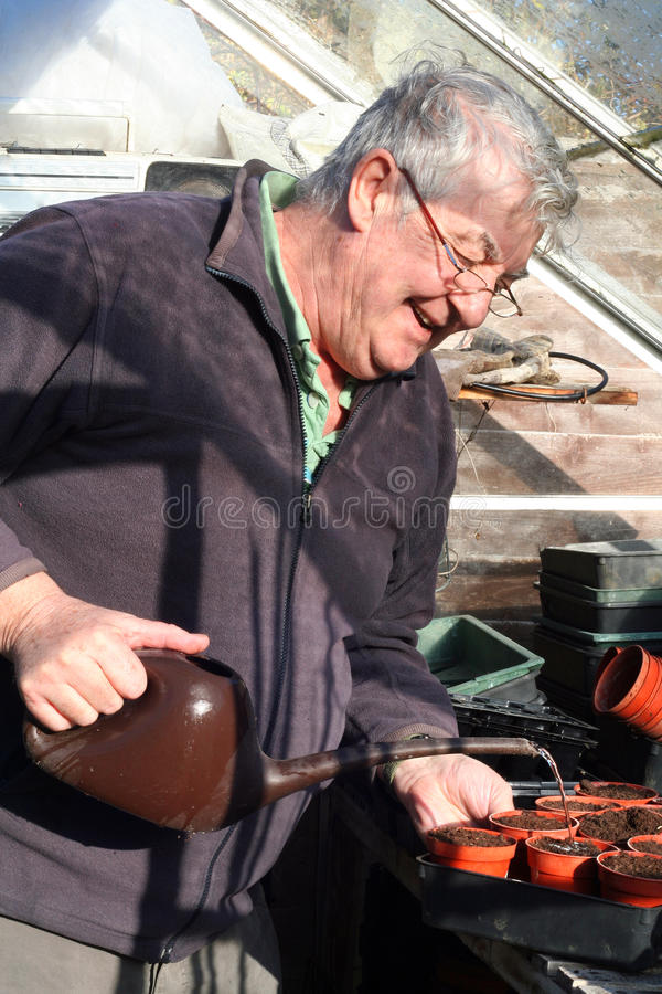 Elderly man watering seeds in greenhouse royalty free stock photography