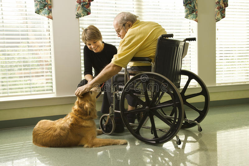 Elderly Man with Woman Petting Dog. Therapy dog is pet by an elderly man in a wheelchair and a younger woman. Horizontal shot royalty free stock image