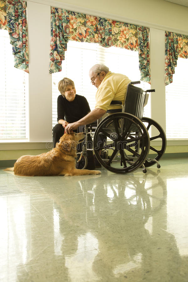 Elderly Man with Woman Petting Dog. Therapy dog is pet by an elderly man in a wheelchair and a younger woman. Vertical shot royalty free stock photos