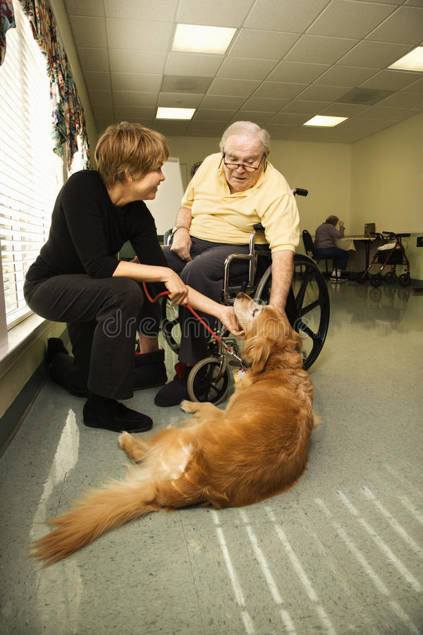 Elderly Man with Woman Petting Dog. Therapy dog is pet by an elderly man in a wheelchair and a younger woman. Vertical shot stock image