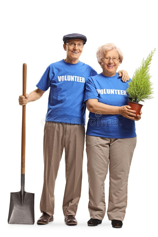 Elderly man and woman volunteers with a tree for planting. Full length portrait of a elderly man and woman volunteers with a tree for planting isolated on white royalty free stock photos