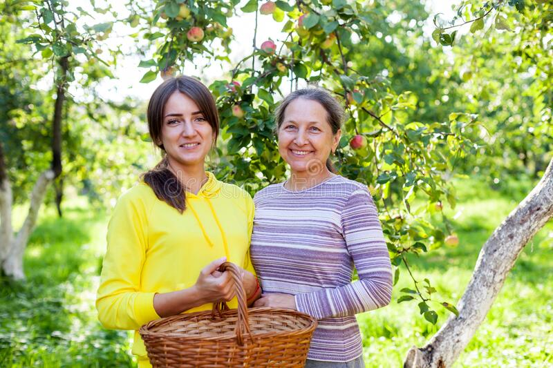 Elderly woman with   adult daughter in   apple orchard stock photo