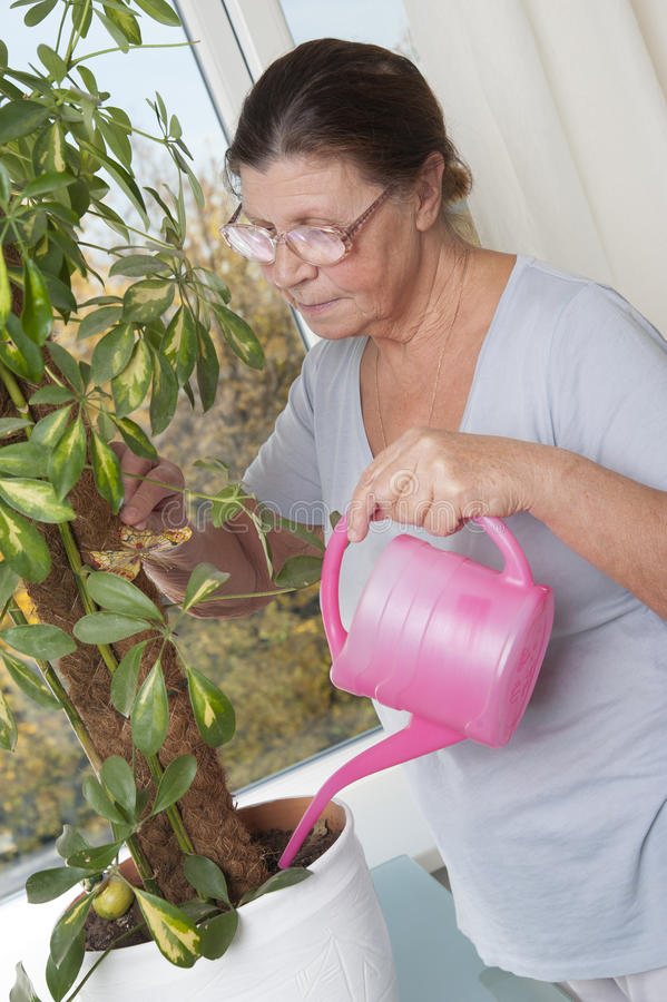 Elderly woman caring for potted plants. stock photo