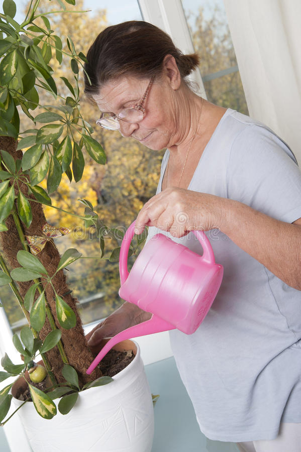Elderly woman caring for potted plants. royalty free stock photo