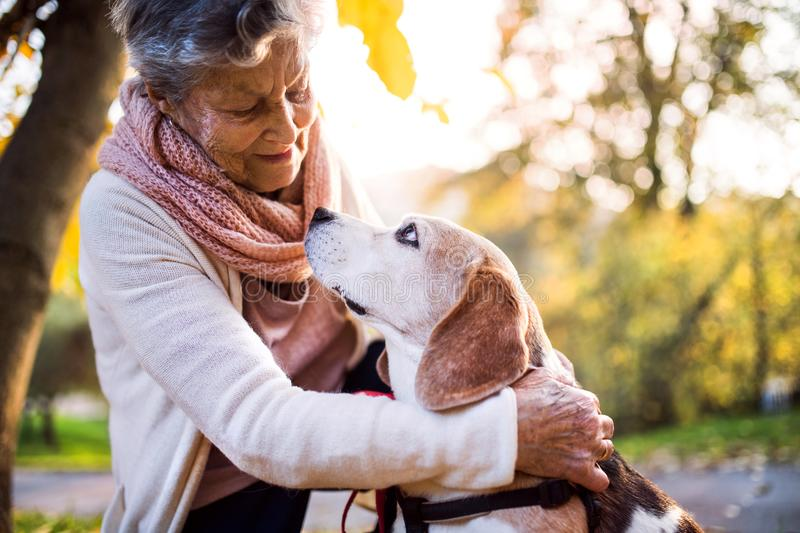 An elderly woman with dog in autumn nature. Senior woman on a walk royalty free stock photos