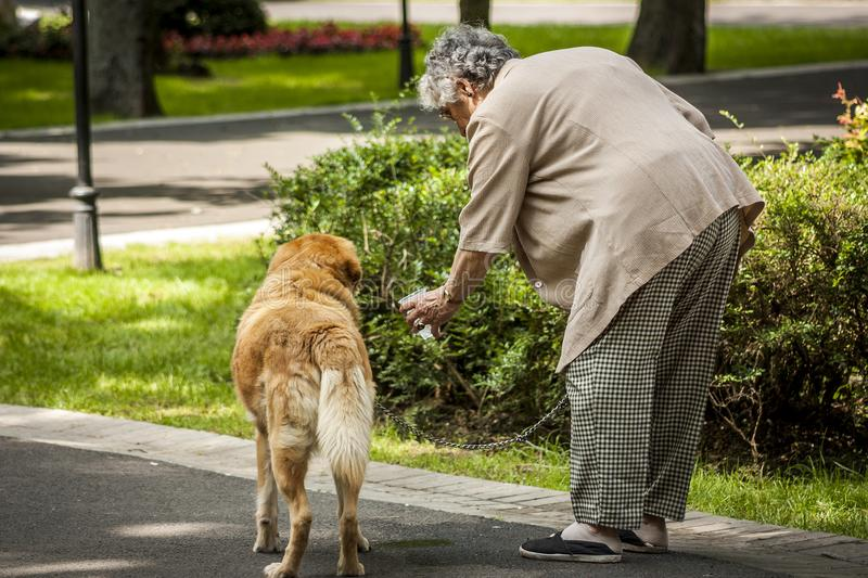 An elderly woman gives water to her pet - a dog in a park in hot weather. concerns for animals and pets. stock image