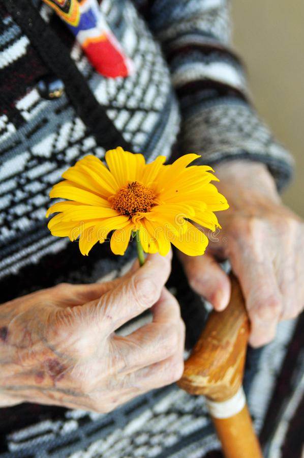 An elderly woman holding a yellow flower and a wooden cane on a summer day on the porch royalty free stock image