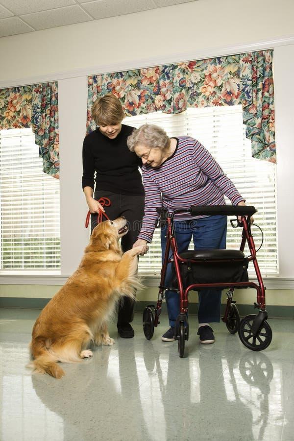 Elderly woman petting a dog. stock image