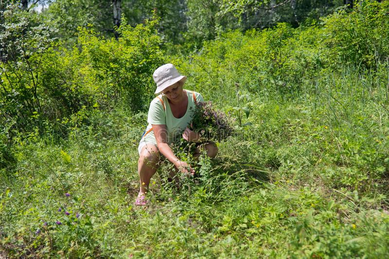 Elderly woman picking flowers in the summer woods. royalty free stock images