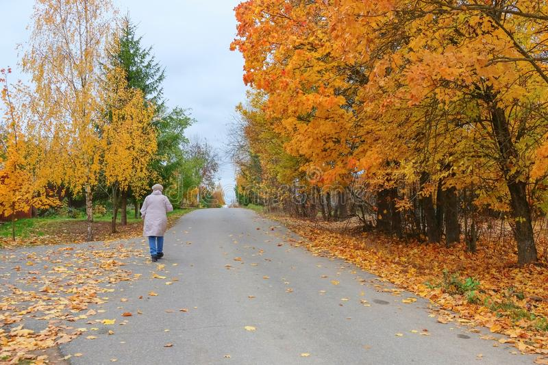 Elderly woman is walking through countryside road full foliage along the colorful autumn park royalty free stock photography