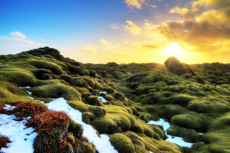 Eldhraun冰岛 免版税图库摄影