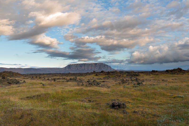 Eldhraun惊人的火山的生苔风景的美好的全景在日出的 库存照片