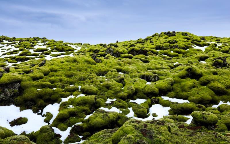 Eldhraun用青苔报道的熔岩荒野,冰岛 图库摄影