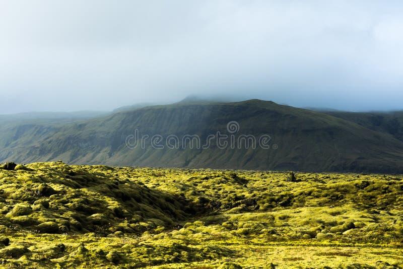 Eldhraun -火山的青苔领域,冰岛 库存照片