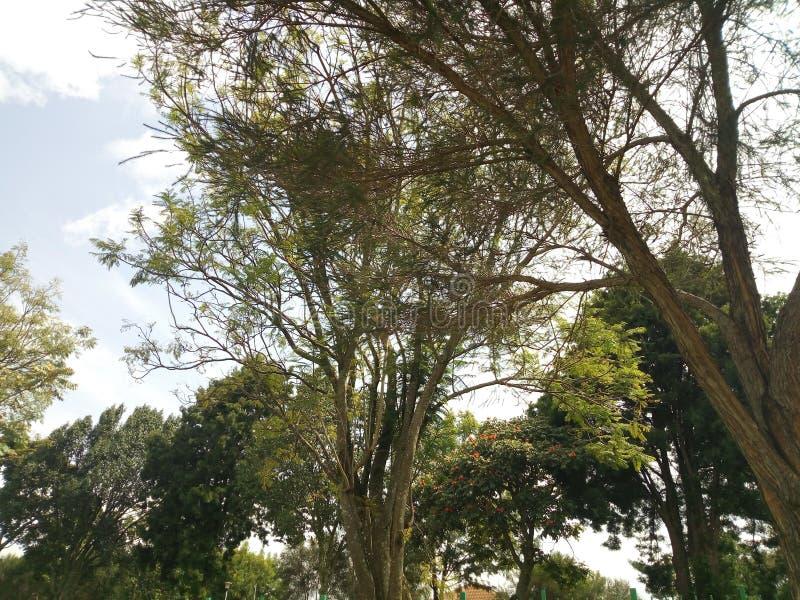 eldoret image libre de droits