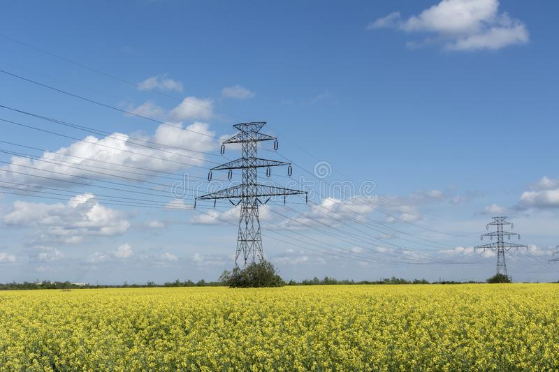 Electicity lines towers on filed of blooming rapeseed. Power lines royalty free stock photography