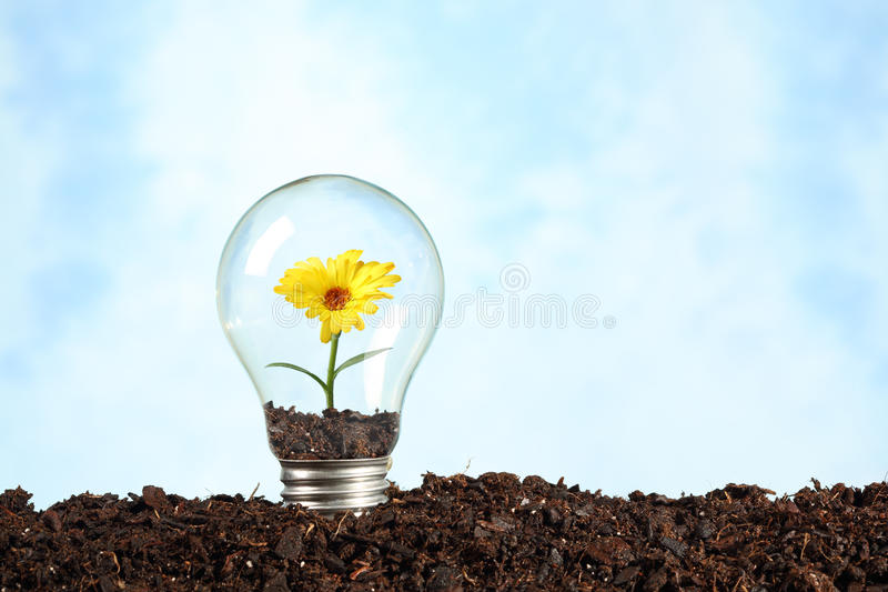 Electric bulb on earth with flower. Renewable energy concept royalty free stock photography