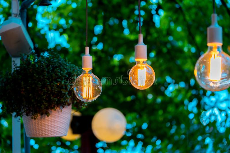 Electric bulb and hanged plant at evening time in garden. Cozy place. Electric bulb and hanged plant at evening time in garden. Cozy and comfortable place royalty free stock photo