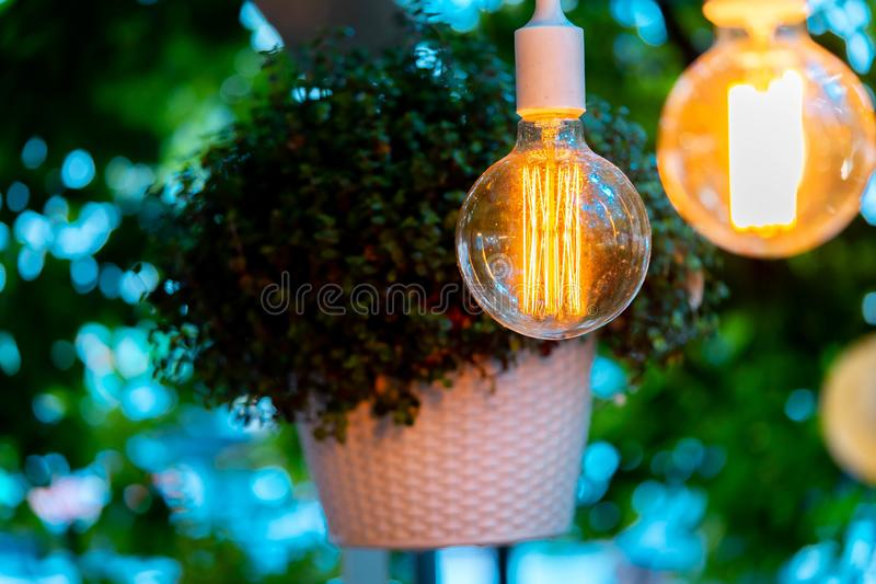 Electric bulb and hanged plant at evening time in garden. Cozy place. Electric bulb and hanged plant at evening time in garden. Cozy and comfortable place stock photos