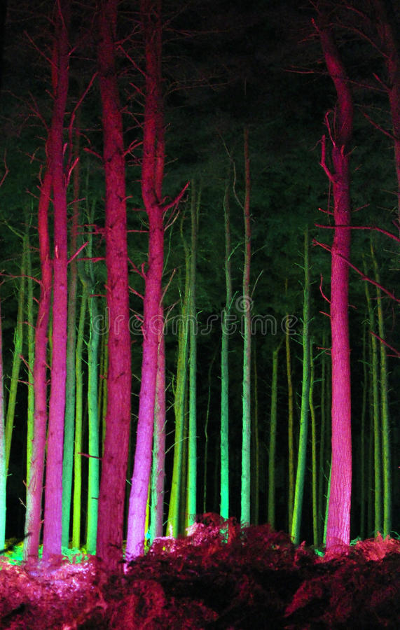 Electric Forest - Thetford, Norfolk, UK. A combination of light, colour and sound brought Thetford Forest alive after dark in the run up to Christmas 2010. The royalty free stock images