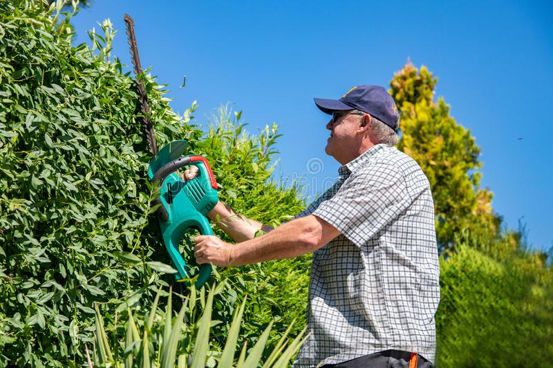 Electric gardening tools. A professional gardener cuts a hedge with an electric hedge trimmer. Gardening and cutting activities stock image