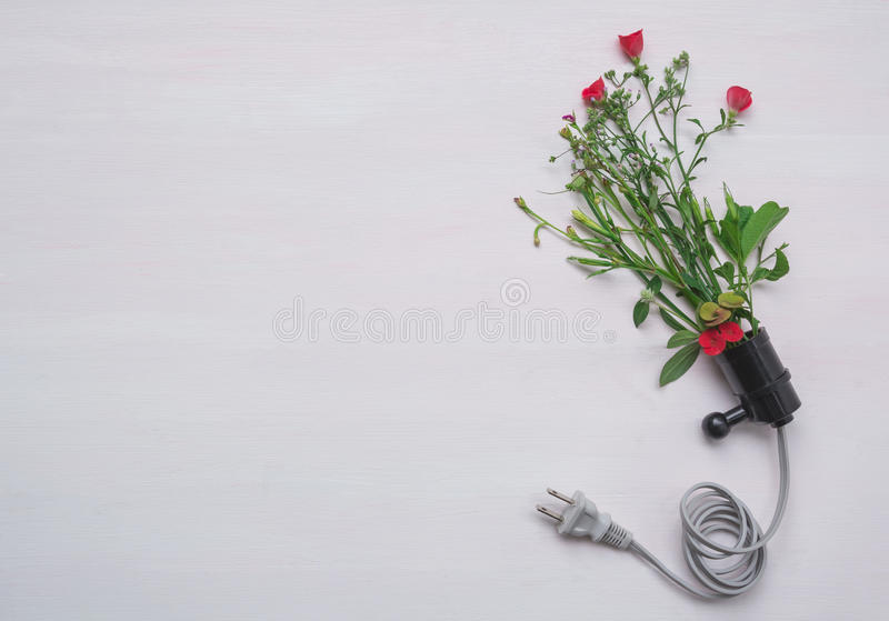 Electric plug with red flower. Fresh red flower in plug stock images