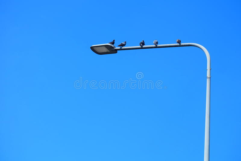 Electric pole and Bird. In the morning many bird keep on it stock photography