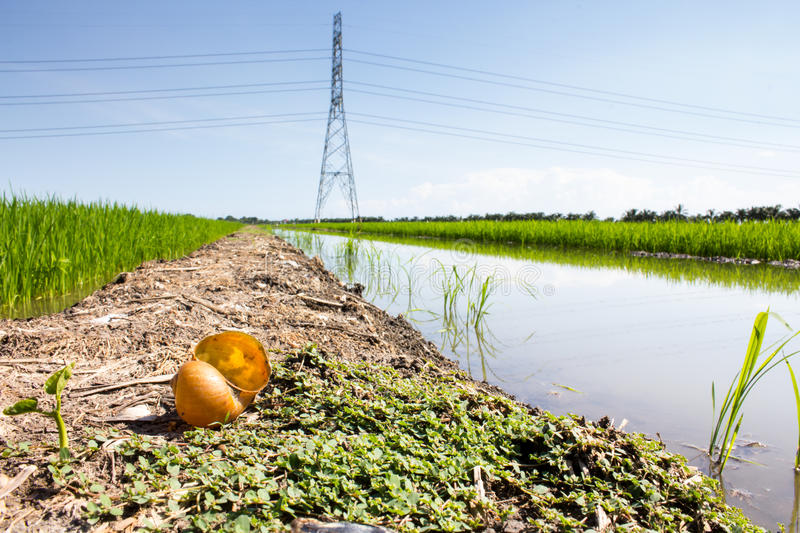Download Electric post stock image. Image of line, electricity - 26202803