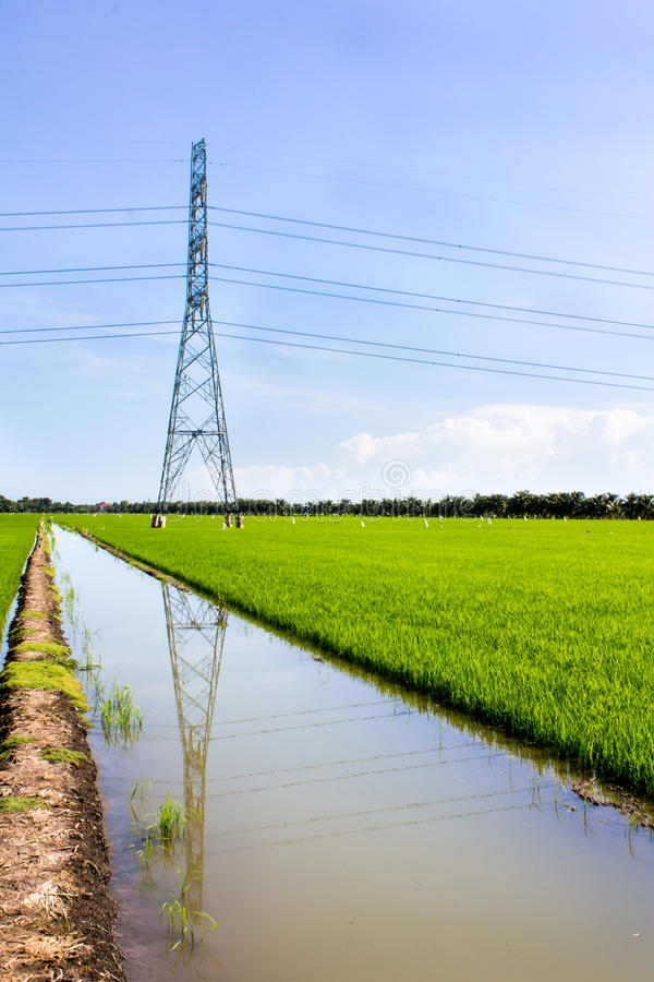 Download Electric post stock photo. Image of farm, network, engineering - 26314406