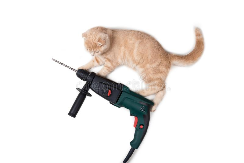Electric puncher or drill with a cat isolated on white background. Construction equipment. Kitten with a drill. Building concept. Fanny cat on the puncher stock photos