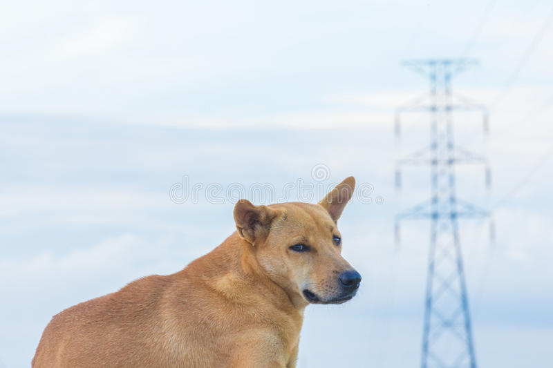 Electricity and dog stock photo