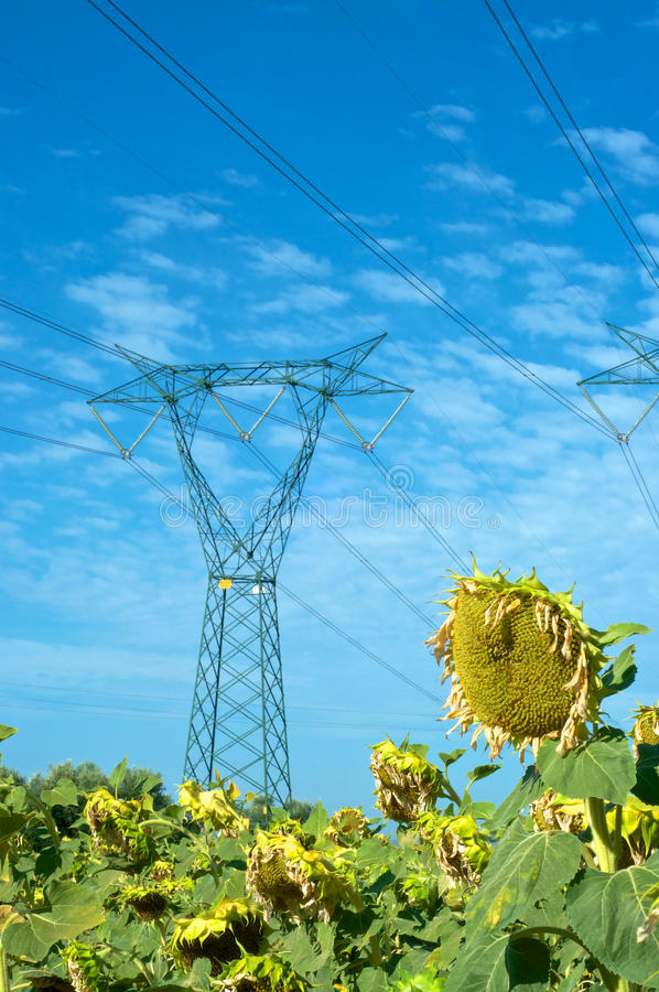 Electricity and nature royalty free stock images
