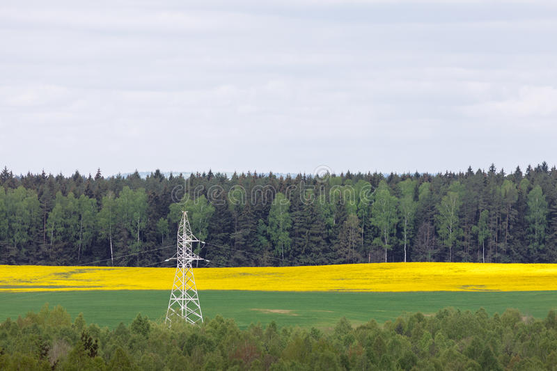 Electricity pylon in canola (rapeseed) field stock photography