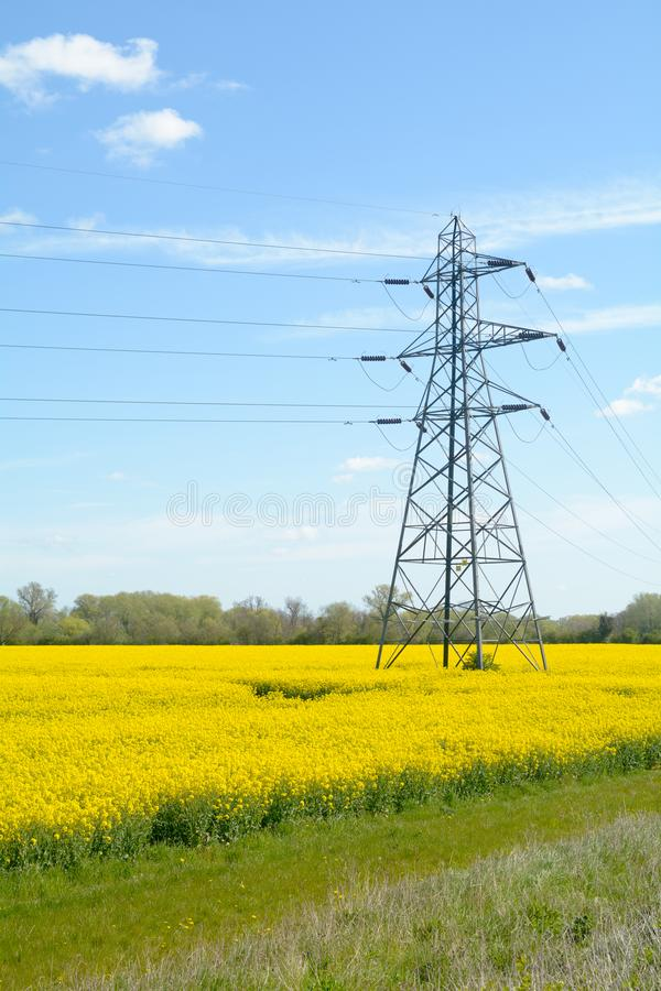 Electricty pylon in rapeseed field stock image