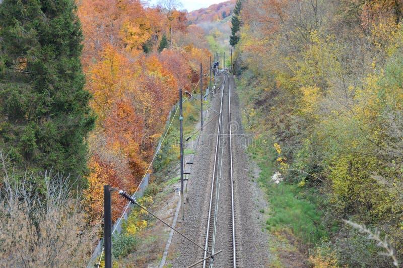 Electrified железная дорога идя через древесины стоковые фото