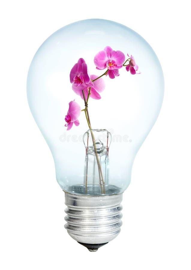 Electrobulb met een bos van orchidee stock foto's