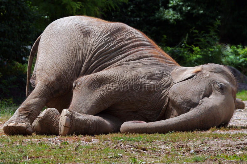 elefant αστείος στοκ εικόνες