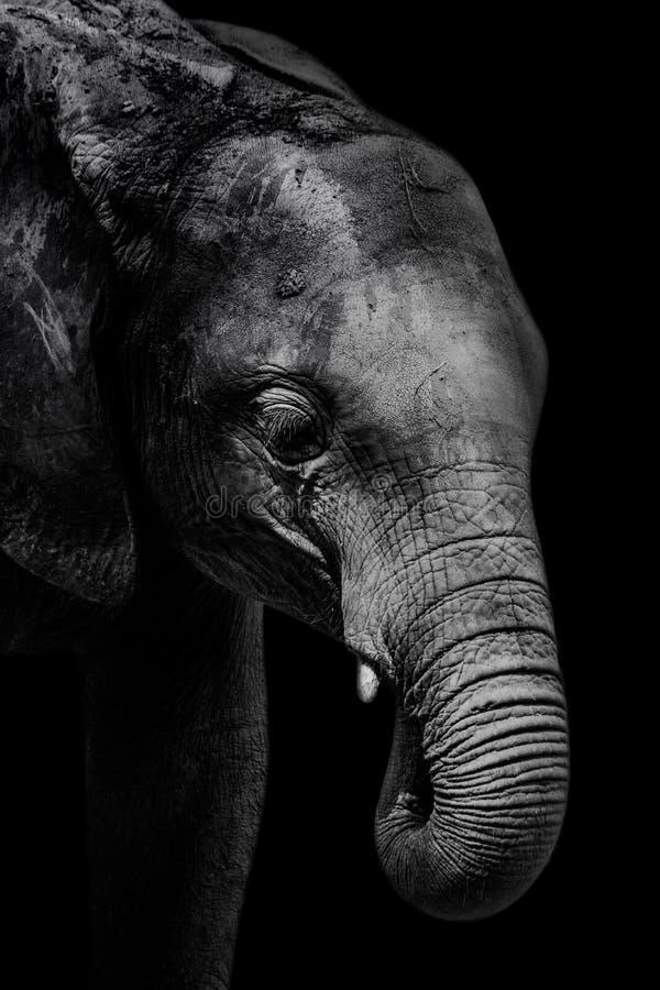 Elefant stockfotografie